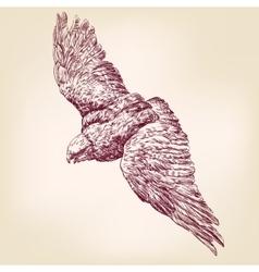 Eagle hand drawn llustration realistic sket vector image