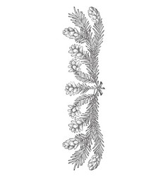 Pine cone border right part could be used at vector