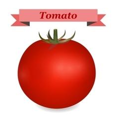 realistic tomato vector image