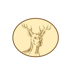 Red Stag Deer Head Circle Etching vector image