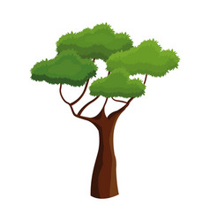 Tree plant natural ecology branched vector