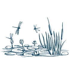 water lily and reeds on the pond vector image vector image