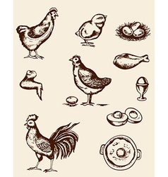 Vintage hand drawn chickens and eggs vector