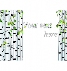 Birch trunk vector