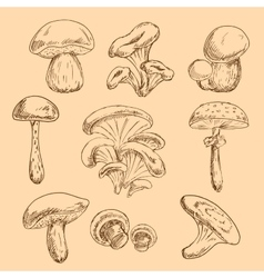 Isolated forest mushrooms sketches set vector