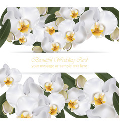 orchid flowers card banner poster realistic vector image