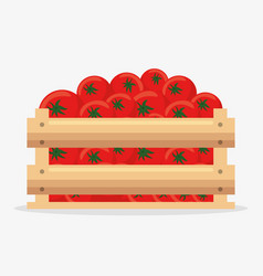 tomatoes basket farm product vector image