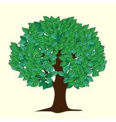 Big tree with green leaves vector image vector image