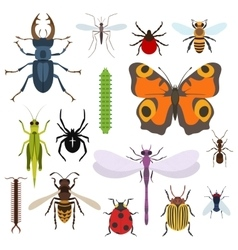 Insects set of icons from top view vector image vector image