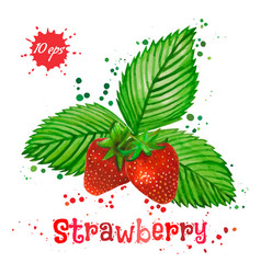 Watercolor strawberry isolated on white background vector