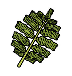 Branch and leaves of tropical plants fronds vector