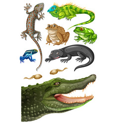 Different types of reptiles vector