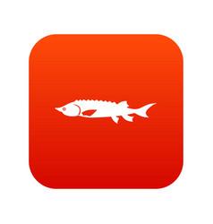 Fresh sturgeon fish icon digital red vector