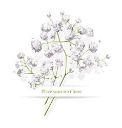 little white flowers bouquet vector image