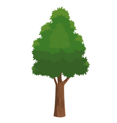 Tree plant natural ecology forest vector