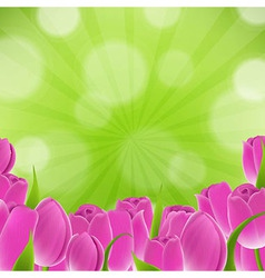 Card With Tulips vector image