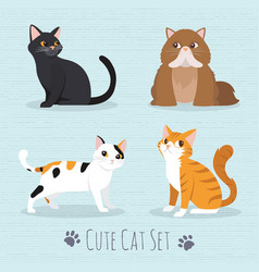 cute cats breed vector image vector image