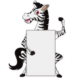 cute zebra cartoon with blank sign vector image vector image