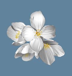 Vintage of jasmine flowers vector