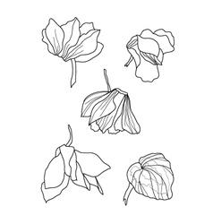 cyclamens pen drawing vector image