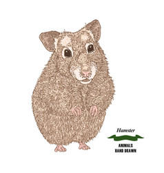 hand drawn hamster colored sketch animal on white vector image vector image