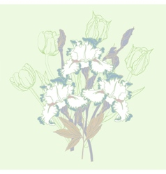 Bouquet with three irises and tulips vector