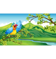 A bird on a branch of a tree vector image vector image