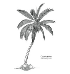 coconut tree hand drawing engraving style vector image vector image