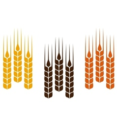 colorful wheat ears vector image vector image