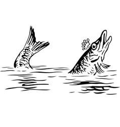 King fish vector image vector image