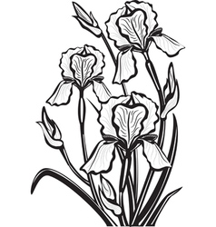 Sketch of iris flowers vector