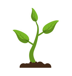 sprout growing plant eco vector image
