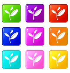 Tea leaf sprout set 9 vector