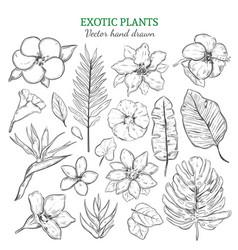 hand drawn exotic plants set vector image