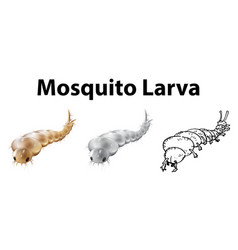Mosquito larva in three sketches vector