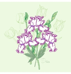 Bouquet with three irises vector