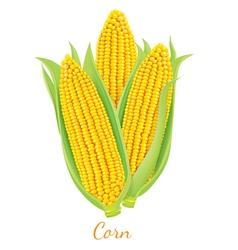 Corn vector image vector image
