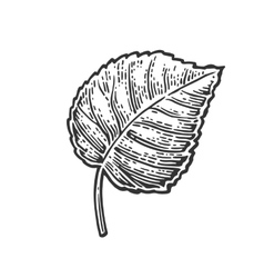Linden leaf vintage engraved vector