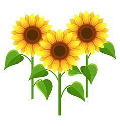 Summer flowers sunflowers nature wallpaper vector image vector image