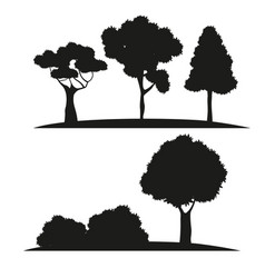 silhouette tree different nature vector image vector image