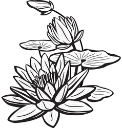 Sketch of lotus flowers vector