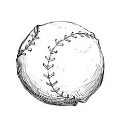 baseball ball isolated vector image
