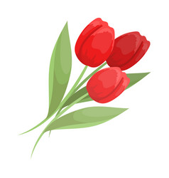 bouquet of red tulips easter single icon in vector image