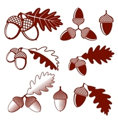 Oak acorns and leaves set vector image vector image