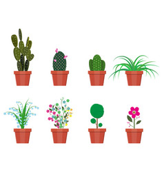 various plants in flower pot vector image