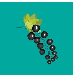 Black currant berries in the garden vector
