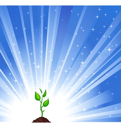 Growing green plant vector