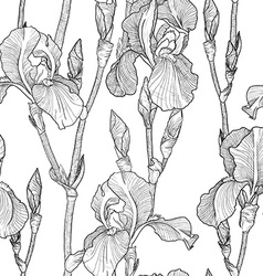 Black and White Sketch of Iris Flowers vector image vector image