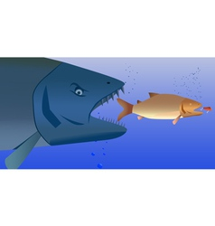 fish predator vector image