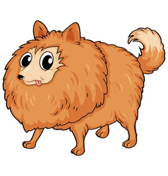 A hairy dog vector image